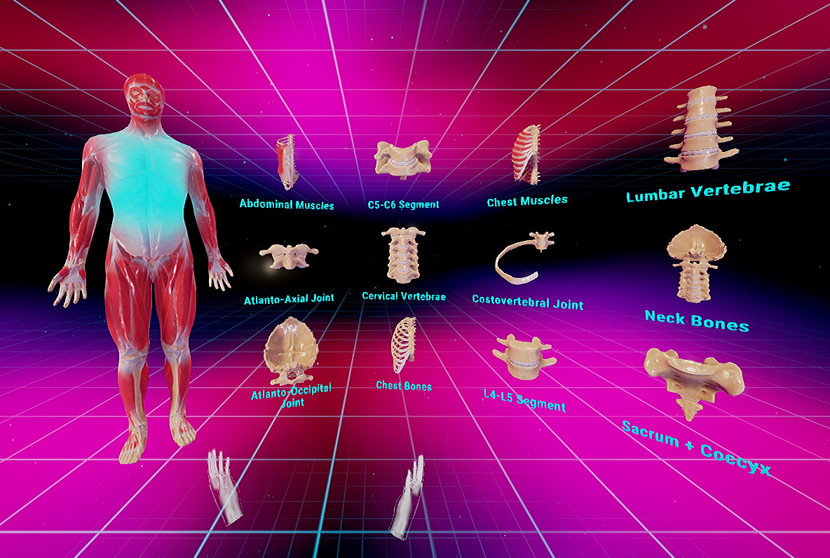 Vr Human Anatomy To Give Medical Students A Hands On Using Oculus